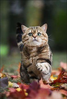 Gotta Make It Through These Leaves....