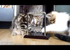 This Is What Happens When Kittens Meet Newton's Cradle!!