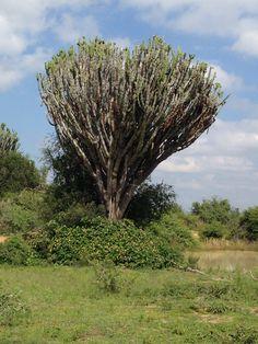 Manalingwe Trees, Awesome, Plants, Plant, Home Decor Trees, Wood, Planting, Planets