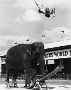 Ben Williams, circus performer, elephant and wild animal trainer, photos and history. Circus Train, Circus Theme, Circus Circus, Vintage Circus Photos, Vintage Photographs, Water For Elephants, Circus Elephants, Circus Pictures, Human Oddities