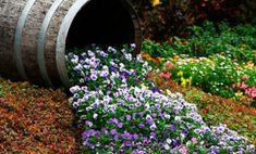 15 poze cu cele mai nemaipomenite straturi de FLORI pentru grădina TA ⋆ New Homes, Backyard, Garden, Plants, How To Make, Mai, House, Yard, Home