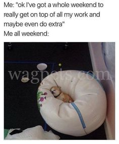 """Me: """"ok, I've got a whole weekend to really get on top of all my work and maybe even do extra"""" Me all weekend Funny Weekend Memes, Weekend Humor, Funny Friday, Dog Memes, Dankest Memes, Life Memes, Life Quotes, Cute Funny Animals, Funny Dogs"""