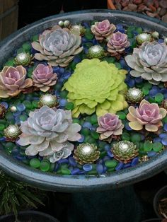 Succulents and blue stones arranged to took like lily pads in a pond.
