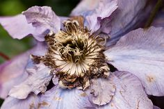 Decaying Flower by David Wilmot, via Flickr