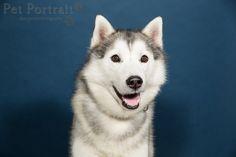 Hondenfotograaf Amsterdam - PetPlan Winner actie - Honden op de Winnershow-5