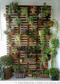 Hanging garden - on wall near courtyard