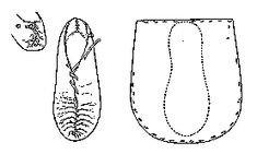 IRISH SLIPPER (pre-10th Century?) Historical Shoe Designs/Number 55