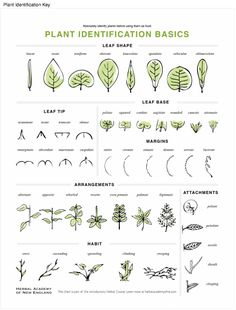 Plant Identification Key Available For In The Introductory Herbal Course Medicinal Plants Tree