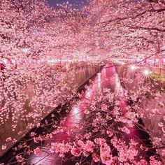 . 東京桜行脚始まりました やはり今年もここに来てしまいました . Location: Tokyo Japan by onotch.x