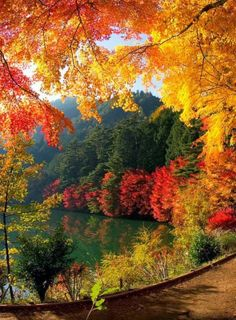 Beautiful Lake in Falltime
