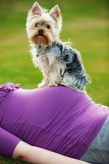 Maternity photo with dog.