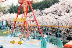 Frühlingskarussell in Seoul