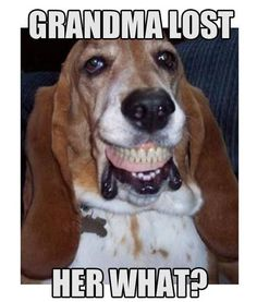 ( Clementine! Give back the teeth. She would so really do this, my crazy Bassett! ASW)    Grandma lost her what? http://www.jokideo.com/