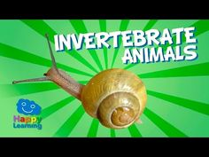 Today we're going to look at vertebrate animals. As you know, we can classify animals in various ways, depending on the characteristics we look at. Today, we...