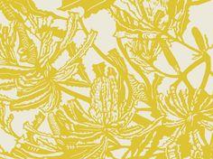 Banksia (Chartreuse & Birch) | Jude Taylor | Wildflower Art, Design & Fabric | Swan Valley, Perth, WESTERN AUSTRALIA