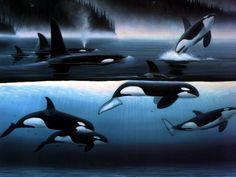 Orca - Inspiration
