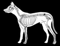 loup dessin squelette - Google Search