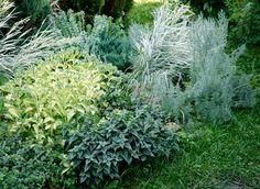 Полынь – Artemisia. Неприхотлива, засухоустойчива, морозостойка. Любит солнце. Сырые участки полыни не подходят. При посадке неплохо добавить яму песок, чтобы почва была более рыхлой. может служить прекрасным фоном практически любым солнцелюбивым растениям, например, многолетний лён.