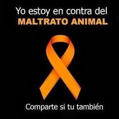 Este liston naranja significa no al maltrato animal publiquelon unas 20…