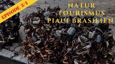Natur Tourismus Piaui Brasilien 3/4