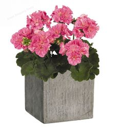 "Square Planter Pot Natural Cement Flower Pots Garden Planter Containers 8"" #GARDENGOODZ"