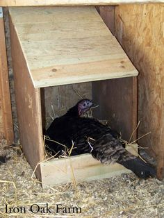 Iron Oak Farm: CC Post: DIY Turkey Nest Box and a GIVEAWAY!!!