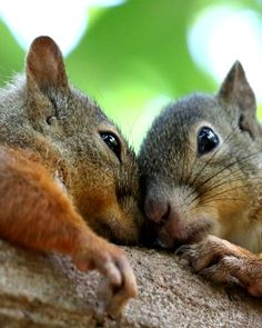 "* * SQUIRREL ON RIGHT: "" Cheer up, bud. Today, yoo be yoo, dat is truer den true. Der be no one alive dat be youer den yoo!"" [Dr.Seuss"