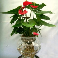 Indoor Plants Online At Nursery Live