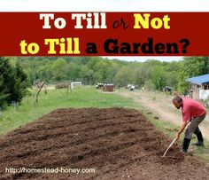 Should you till your garden, or not? | Homestead Honey