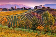 Colori autunnali tra i vigneti delle colline trevigiane Dolomiti Veneto Italia
