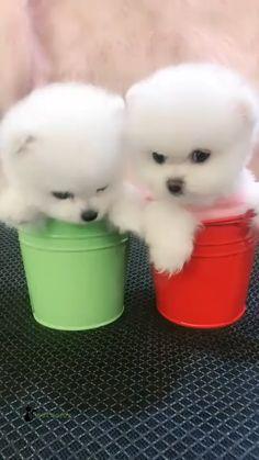 Cute Small Animals, Baby Animals Super Cute, Cute Wild Animals, Cute Baby Dogs, Cute Funny Dogs, Cute Dogs And Puppies, Cute Funny Animals, Cute Cats, Cute Pomeranian