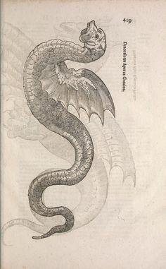 Ulyssis Aldrovandi ... - Biodiversity Heritage Library