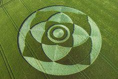 Crop circles | CROP CIRCLES DE MAYO II