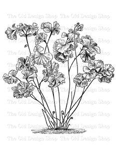 Maidenhair Flower Clip Art Vintage Printable Floral Illustration Iron On Transfer Digital Download PNG JPG Image