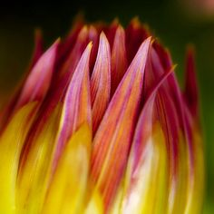 wealth of bloom
