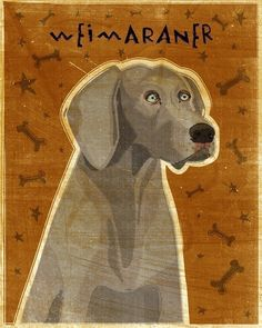 New to johnwgolden on Etsy: Gray Weimaraner Print 8 x 10- Weimaraner Art- Dog Print- Weimaraner Gifts- Chrstmas Gifts for Couples- Gifts for Pet Lovers- Gifts for Boss (21.00 USD)