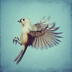 Bird photo  Tufted Titmouse  8x8 flying bird photo by elgarboart, $30.00