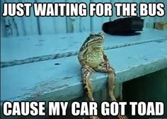 Toad Puns :)