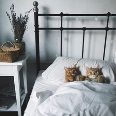 Three Kittens in a Basket Animal Cat Cats animal baby animal basket cat cute kitten Funny Cats, Funny Animals, Cute Animals, Baby Animals, Animals Images, Crazy Cat Lady, Crazy Cats, I Love Cats, Cool Cats