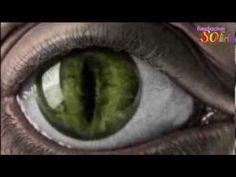 MAYA, el HOLOGRAMA la Pineal y los Ojos, 2da Parte