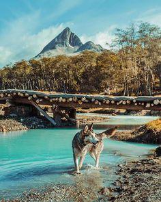 Nosso companheiro de trilha em Ushuaia!  A caminho da Laguna Esmeralda com @brasileirosemushuaia. : @isthisreal  #ushuaia #dicasdeviagem #patagonia  #brasileirosemushuaia #argentina