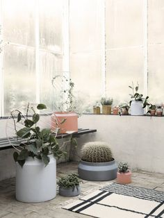 Ferm Living Design Accessories on YOOX. The best online selection of Design Accessories Ferm Living. Potted Plants, Indoor Plants, Green Plants, Cactus E Suculentas, Grands Pots, Pot Lights, Deco Boheme, Concrete Pots, Plant Wall