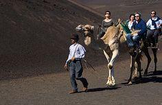 Paseo en camellos por Timanfaya.