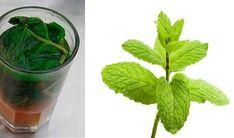 Len jeden pohár tohto prírodného nápoja prečistí a obnoví vašu pečeň. - Báječné zdravie