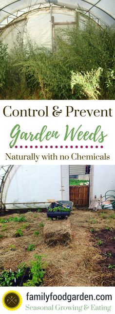 What to do When Weeds Have Taken Over Your Garden - Family Food Garden