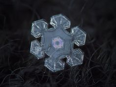 These Macro Photos Of Snowflakes Are Totally Breathtaking. With his stunning close-up photos of snow in Moscow, Russia, Alexey Kljatov proves nature is the world's most spectacular artist. Fotografia Macro, Snowflake Photography, Snow Photography, Amazing Photography, How To Make Camera, Snowflake Images, Ephemeral Art, Photo Pin, Close Up Photos