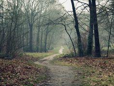 木の画像, トラックの壁紙, 地球ベクトル, 空虚写真, 湿気, 葉背景, 霧の写真, 秋の素材