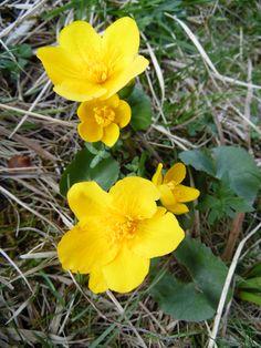 Wenn die Blumen wieder blühen und die Sonne lacht, weckt dies Frühlingsgefühle in uns. Freuen wir uns auf den nahen Sommer.  www.hotelauszeit.ch www.facebook.com/hotelauszeit www.instagram.com/hotelauszeit
