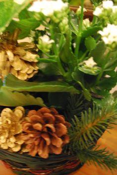 Jouluasetelma Plants, Christmas, Xmas, Weihnachten, Yule, Planters, Jul, Natal, Natale