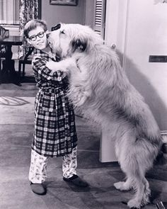 Tramp was the family dog on TVs My Three Sons - the show ran from 1960-1972 - here's Tramp with little Ernie.
